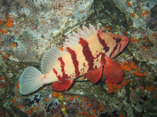 Hornby Island Diving - fascinating finds on Vancouver Island